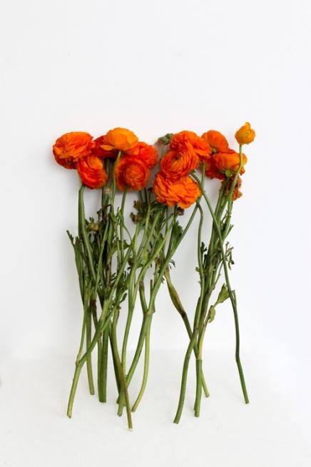 Kelly Lynn Jones flower study